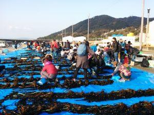 ワカメ収穫で賑わう須磨漁港