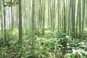 竹パウダーコンポスト