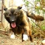 愛犬あらびきジャンプ