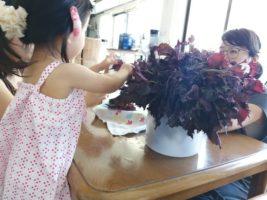 大家さんファミリーと一緒に赤紫蘇ジュース作り