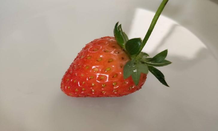 かわいいイチゴ採れました